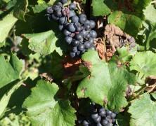 Les Vins du Jura