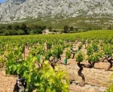 Pays d'Aix – Vignobles & Découvertes
