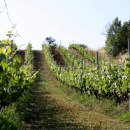 Quelques (bons) vins du Centre-Loire