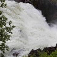Suède : la gastronomie au naturel