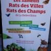 Rats des Villes & Rats des Champs – La Bellevilloise