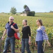 Marche Dégustation en Bourgogne du sud