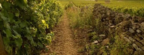 Sélection Foire aux Vins 2019