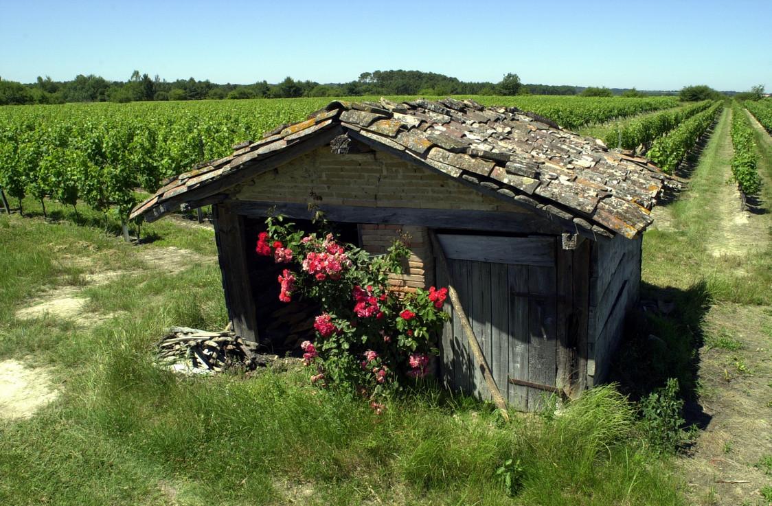 Fronton vin et cabane