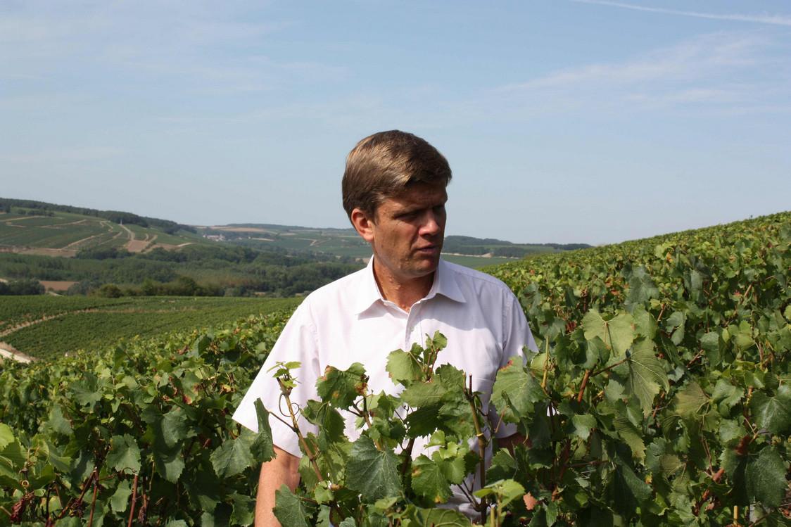 Frédéric Drouhin dans les vignobles Vaudésir
