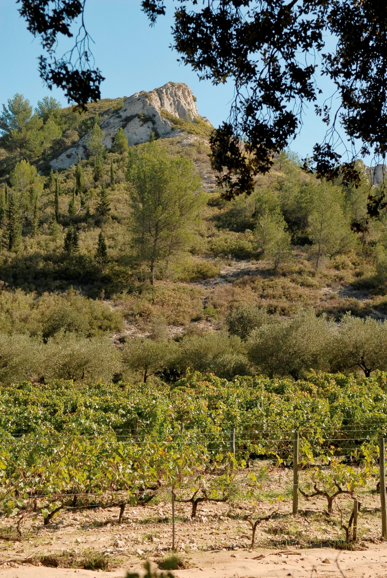 Vignobles à Dalmeran