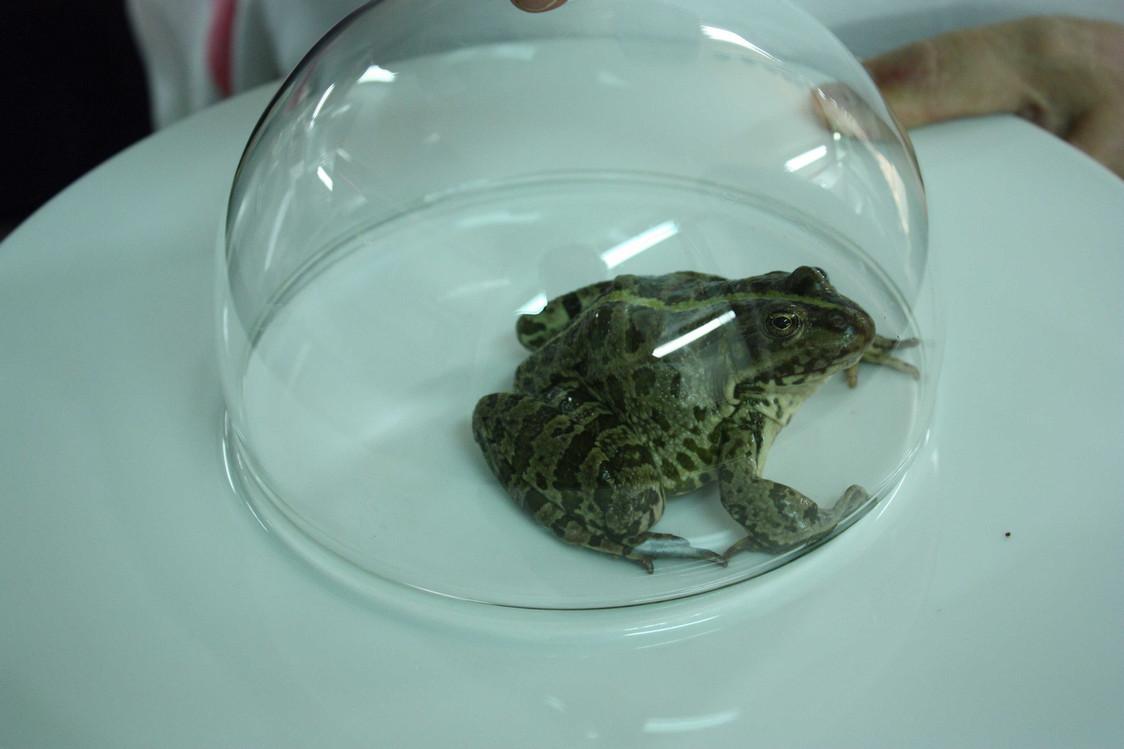 Les cuisses de grenouille... avant © P.Faus