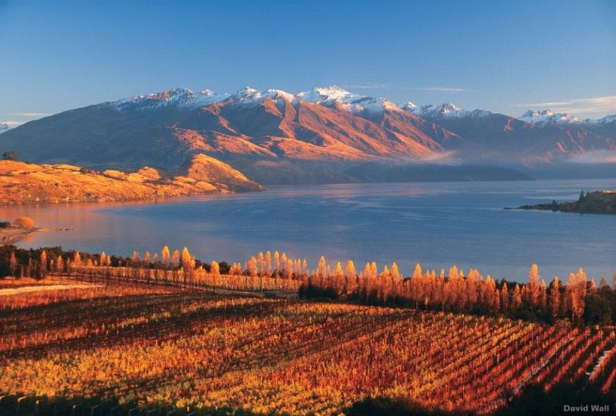 Vignoble - Otago