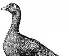 Foie gras au piment d'Espelette