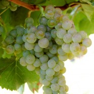 De Quelques Vins