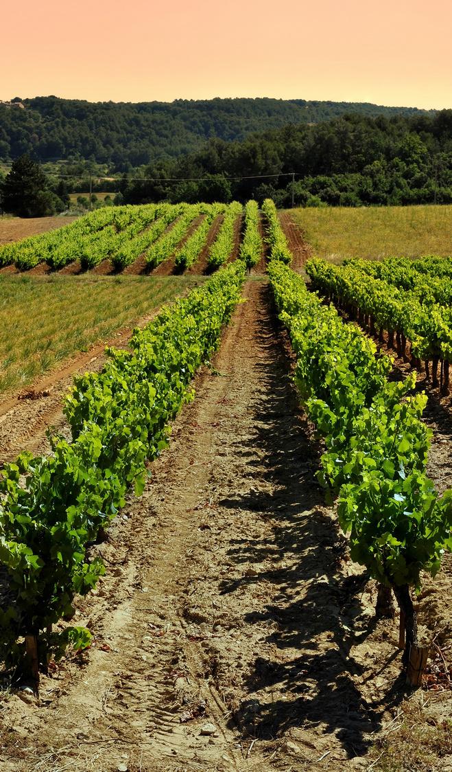 AOC Luberon Vignes