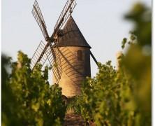 Les Vins, un peu, beaucoup, passionnément…