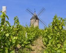 Beaujolais – La splendeur du millésime 2015