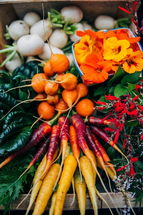 Légumes du potager…