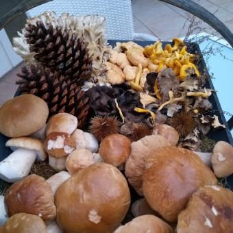 Arrivage des champignons du matin © Gourmets&co
