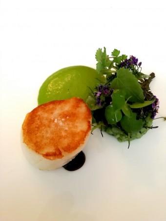 Saint-Jacques, persil © Gourmets&co