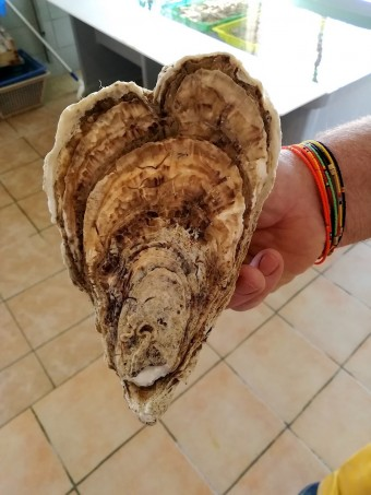 Huître en cœur © Gourmets&co