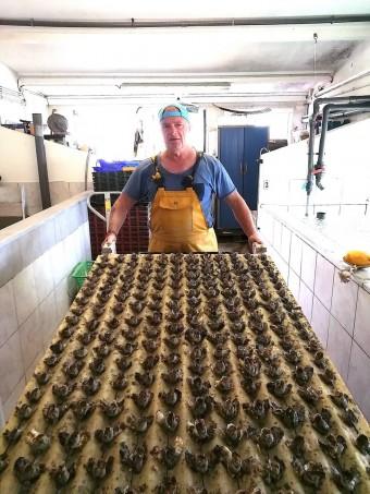 Le siuer Guinot et ses huîtres © Gourmets&co