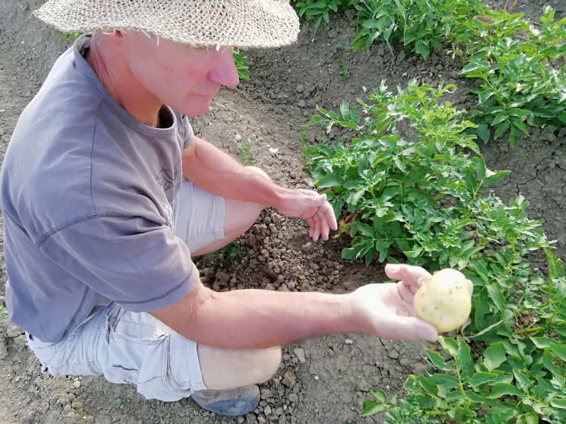 Pomme de terre © Gourmets&co
