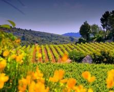 Lorgeril et ses domaines en Languedoc. Un festival de rosés.