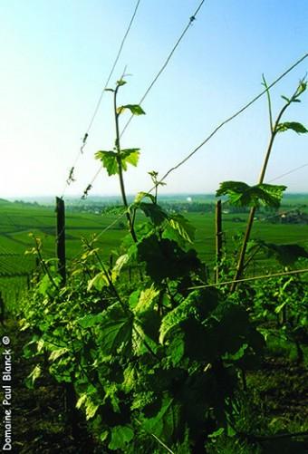 vigne-9_1