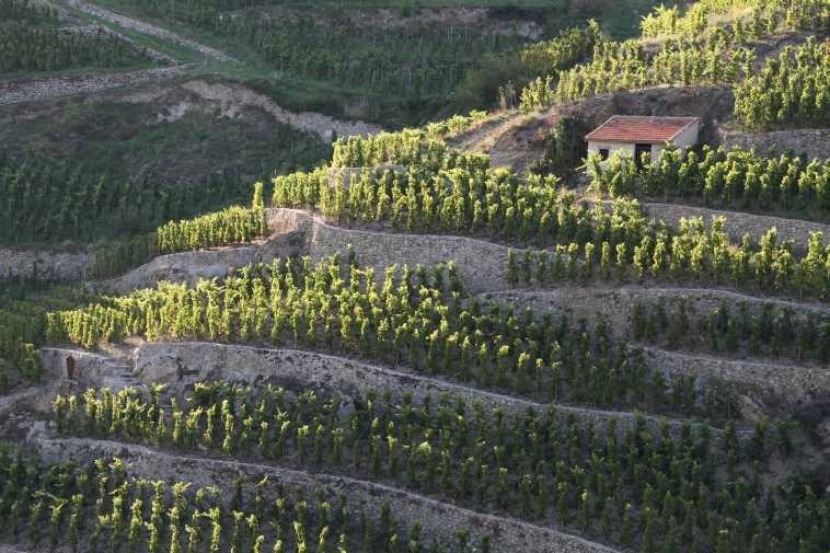 Cabane de vigneron en Hermitage-c99df4a4 (1)