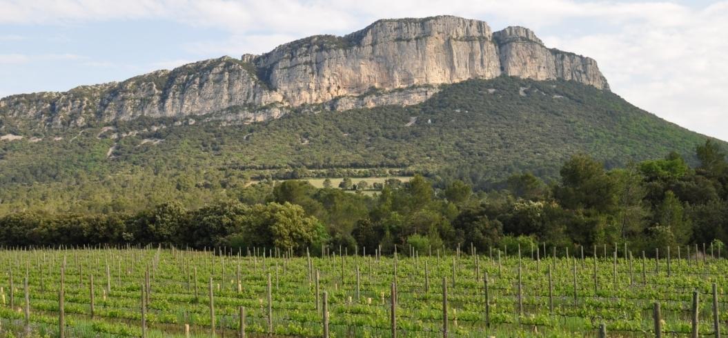 parcelle-bosquet-domaine-de-l-hortus-pic-saint-loup-1363297899-214
