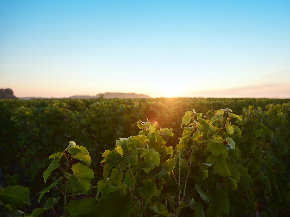 vin-de-montlouis-7